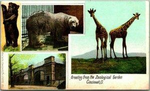 1900s CINCINNATI Postcard Greeting From Zoological Garden Giraffes Polar Bear