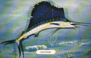 Sailfish Istiophorus Americanus