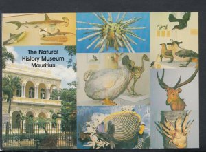 Mauritius Postcard - The Natural History Museum     T6988