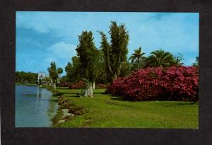FL City view Orlando Florida Postcard Lake Eola Park Floral Flowers Azaleas Palm