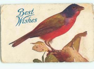 Pre-Linen CLOSE UP OF BEAUTIFUL LARGE BIRD AC3986