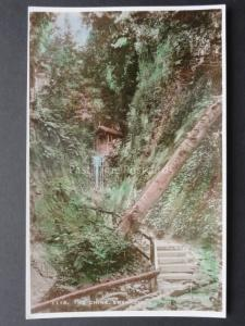 Isle of Wight: The Chine SHANKLIN - Old RP Postcard by E.A.S. No.1115