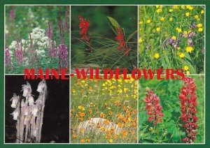 Fire Weed Cardinal Flower Wild Iris Buttercups Indian Pipes Devils Paint And ...