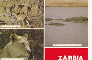 Impala, Lioness Head & Hippo on Kafue River, Kafue National Park, Zambia, 50-70s