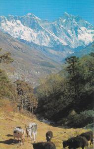 Mt Everest , NEPAL , 50-60s