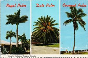 Popular Palms in Florida FL Fla Trees Multiview c1978 Postcard D57