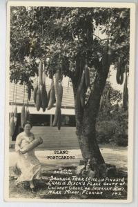 COCONUT GROVE, FL SAUSAGE TREE, CHARLIE BLACK'S PLACE REAL PHOTO POSTCARD