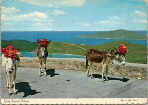 postcard Virgin Islands - Gaily decorated donkeys, St. Thomas