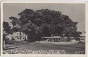 Florida FL Real Photo RPPC Postcard c1950 WEST PALM BEACH Giant BANYAN TREE