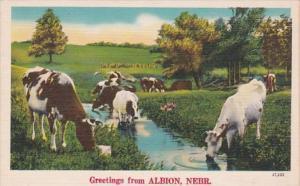 Nebraska Greetings From Albion