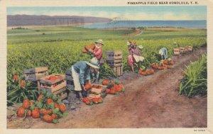HONOLULU , Hawaii , 1944 ; Pineapple Field