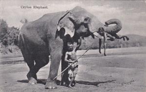 Elephant ,  Ceylon , 00-10s