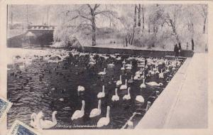 Swans, Schwanenbucht, Hamburg, Germany, 1900-1910s