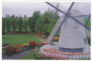 Tulips and Windmill At Roozengaarde Division Of Washington Bulb Company Mount...