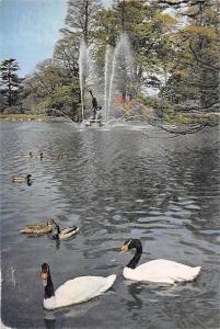Royal Botanic Gardens, Kew Black necked Swan