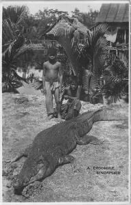 Singapore A Crocodile Singapore Children Native Houses Postcard