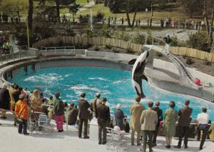 VANCOUVER , B.C. , Canada , 50-70s ; Skana the Killer Whale