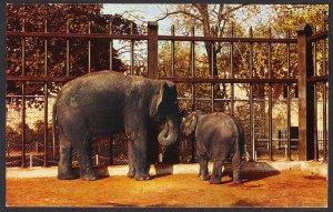 """NY - Buffalo Zoological Gardens - Indian Elephants """"Lulu"""" and """"Li'l e"""""""