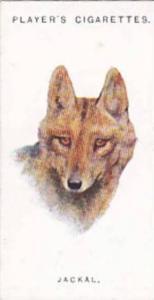Players Vintage Cigarette Card Wild Animal Heads No 30 Jackal