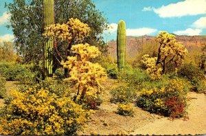 Arizona Desert Scene Saguaro Cactus