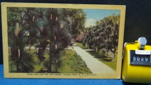 STD Vintage Young Long Leaf Pine with Candles North Carolina Unposted
