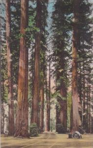 California Redwood Grove High Way Through Redwood Grove On the The Redwood Hi...