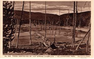 Trees Destroyed by Hot Springs Overflow, Yellowstone National Park, 1914