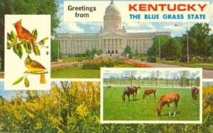 Greetings from Kentucky, The Blue Grass State, unused Pos...