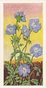 Glengettie Trade Card Wild Flowers No 19 Meadow's Crane-Bill