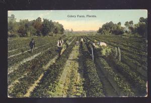 FLORIDA CELERY FARMS FARM FARMING ANTIQUE VINTAGE POSTCARD