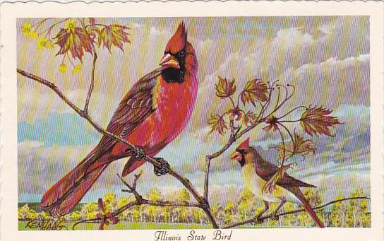 cardinal illinois state bird hippostcard