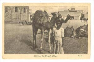 Ships of the desert, Aden, Yemen, 00-10s