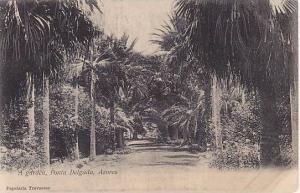 Garden , Ponta Delgada , Azores , Portugal , 00-10s