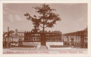 Cuba Havana American Fraternity Tree Real Photo