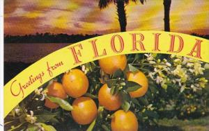 Greetings From Florida With Oranges