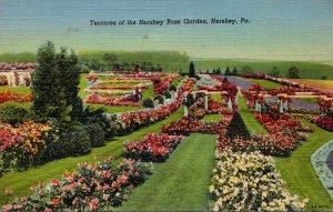 Pennsylvania Hershey Terraces Of The Hershey Rose Garden Curteich