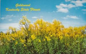 Goldenrod Kentucky State Flower