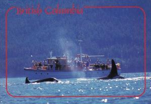 Canada British Columbia Whale Watching
