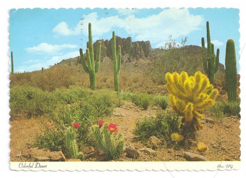 Desert Cactus Beaver Tail Cholia Cactii  4X6 1975