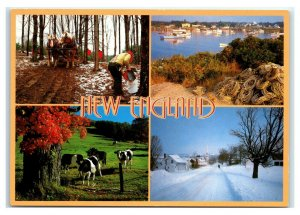 Postcard Greetings from New England - Multi View Maple Harbor Cow Snow NES51 K3