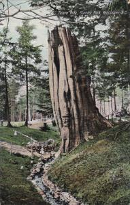 VANCOUVER, British Columbia, Canada; Totem Pole, Stanley Park, 00-10s