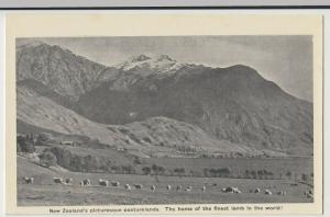 New Zealand's Picturesque Pastures, Finest Lamb In The World PPC, Unused, c 1920
