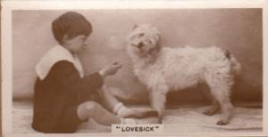 Lovesick Dog Pining For Lover Antique Dogs Cigarette Photo Card