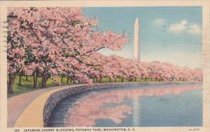Washington DC Japanese Cherry Blossoms Potomac Park 1940