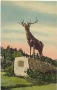 The Elk, Mohawk Trail, Massachusetts, 00-10