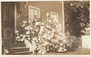 RP: STOWE, Vermont, 00-10s; Flowers outside House