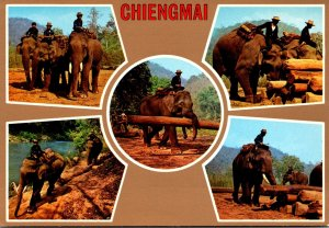 Northern Thailand Chiengmai Multiple Views Of Elephants At Work
