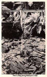 New Zealand Old Vintage Antique Post Card Fairy Spring Rotorua Unused