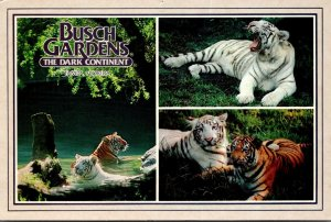 Florida Tampa Busch Gardens Claw Island Yellow and White Bengal Tigers