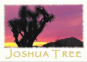 US. Arizona  Joshua Tree, also known as Yucca brevifolia.  Unused